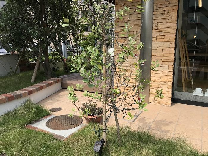 江戸川区で注文住宅を建てるニットー住宅の育ちざかりの木々の写真です。