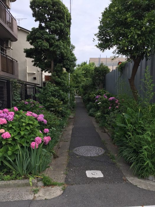 江戸川区で注文住宅を建てるニットー住宅の牛山が見つけた小道の写真です。