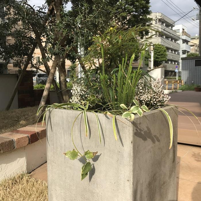 無添加の漆喰や無垢の天然木にこだわった注文住宅を得意とする工務店ニットー住宅 コンクリート鉢