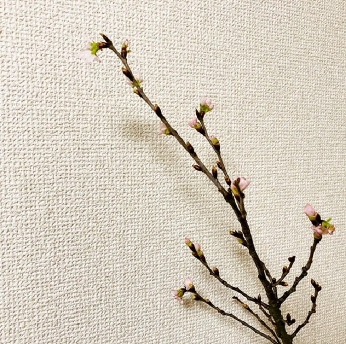 江戸川区で注文住宅を建てるニット―住宅の花を飾るということについて
