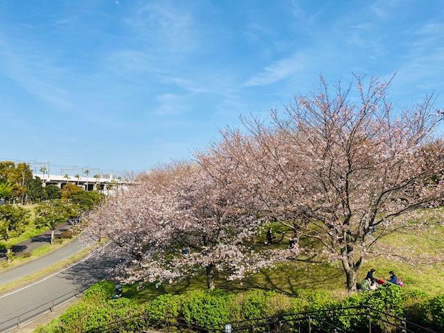 江戸川区で注文住宅を建てるニット―住宅のシンボルツリーについて