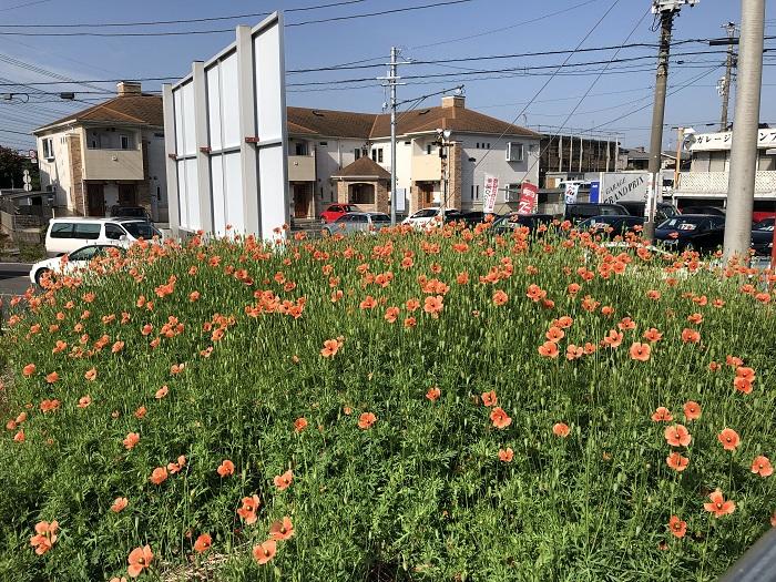 江戸川区で注文住宅を建てる工務店の株式会社ニットー住宅の三宅が撮影したポピーの丘
