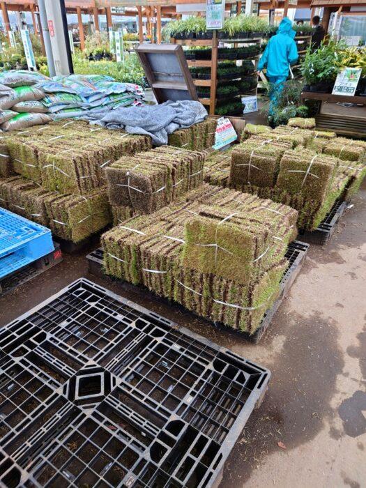ウッドショックに負けない江戸川区で無垢材と漆喰でこだわりの注文住宅をつくる工務店ニットー住宅 芝生の販売風景