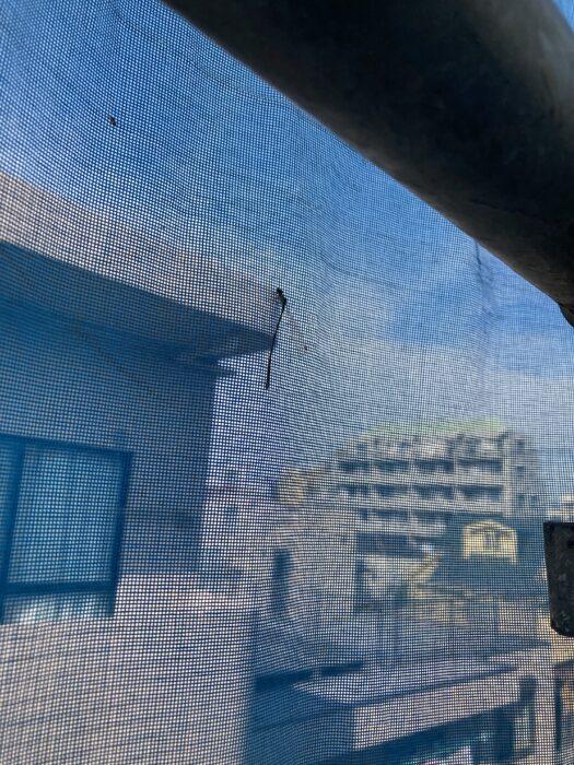 江戸川区で注文住宅を建てるニットー住宅の足場